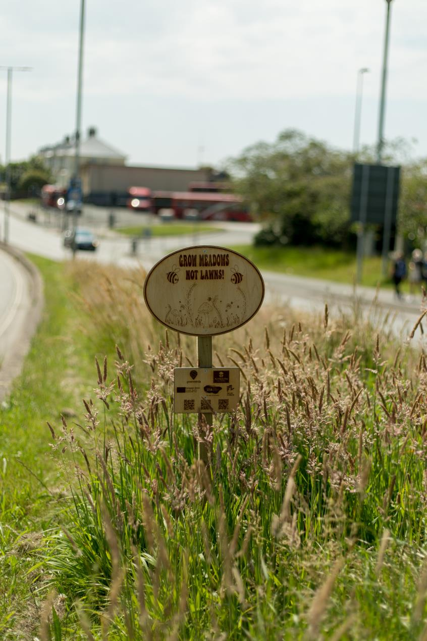 Wildflower meadow sign designed by Eve Newman Image Credit_Ray Goodwin