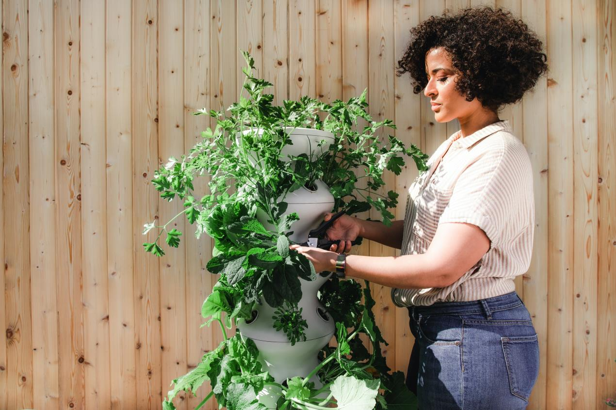 Horticulture and Mental Health
