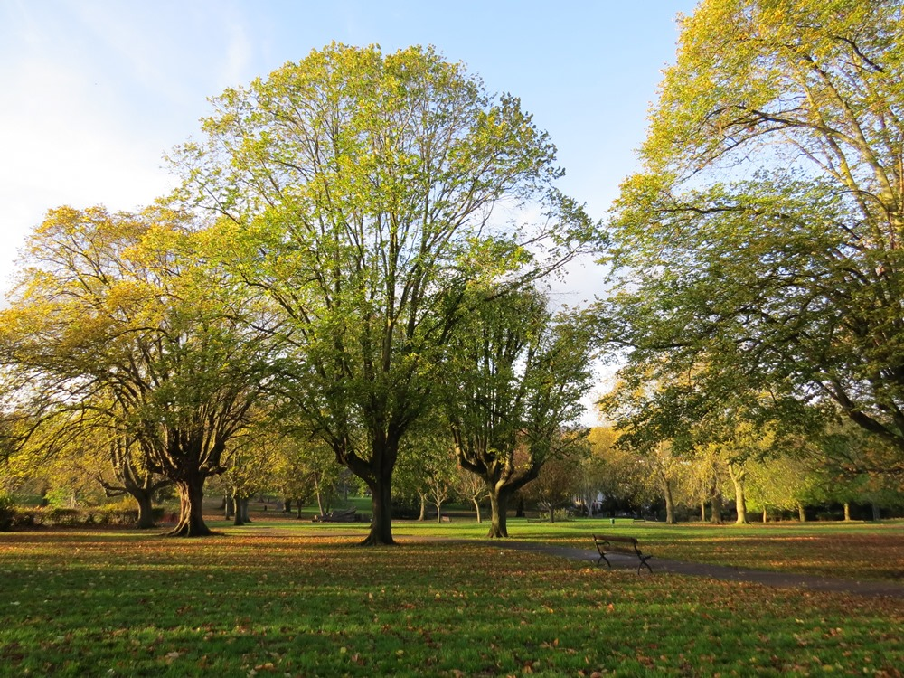 Two weeks left to join over a thousand people sharing their views on plans for Bristol's parks
