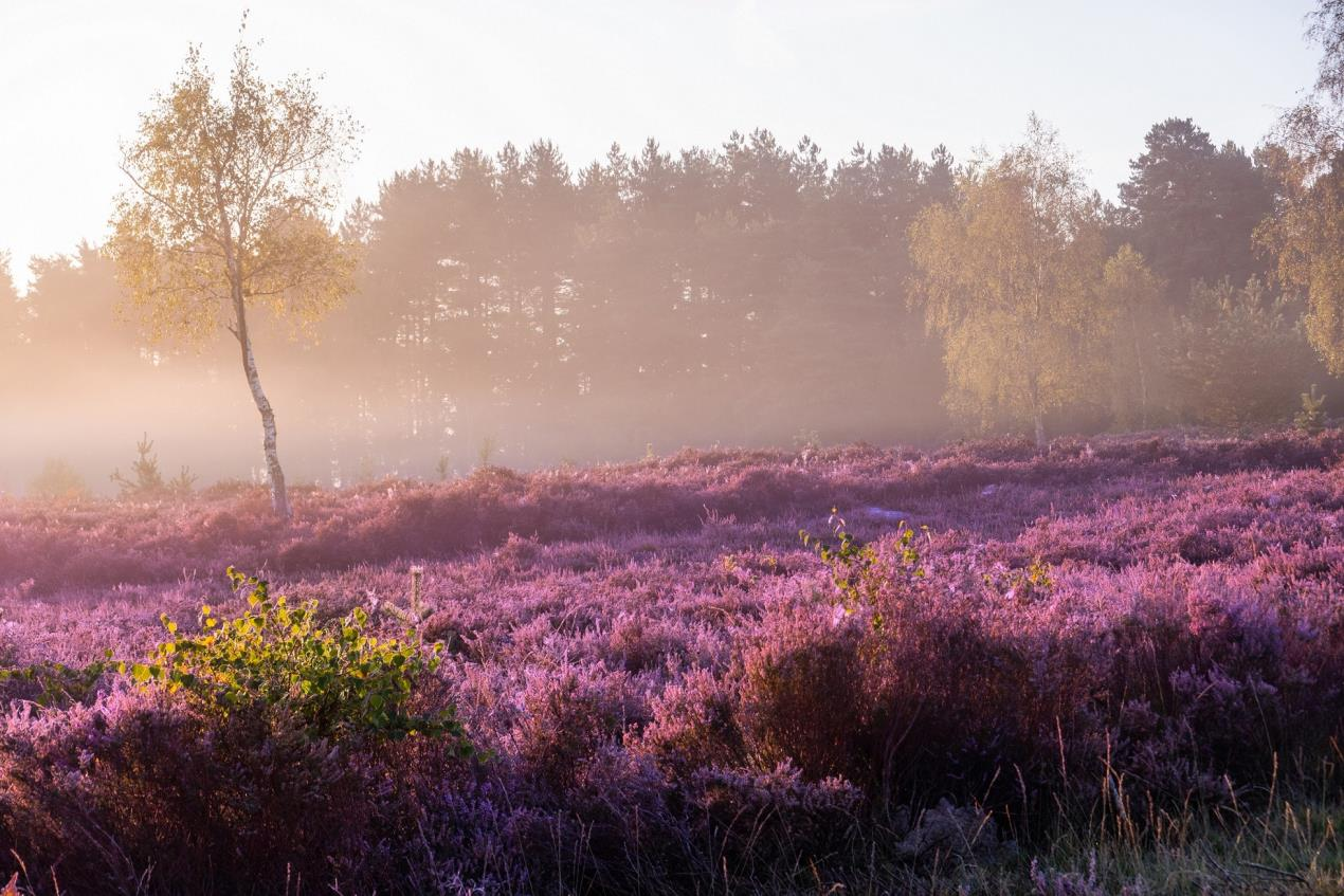 Stedham Common by Sam Moore