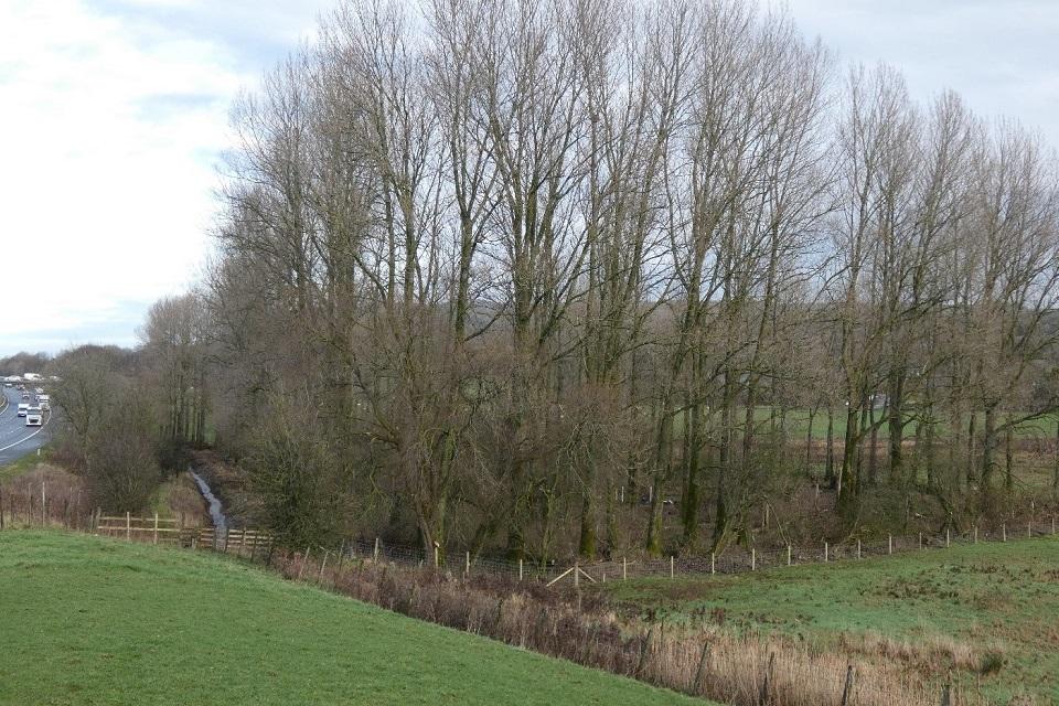 Burton Wood 1a